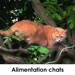 alimentation chats