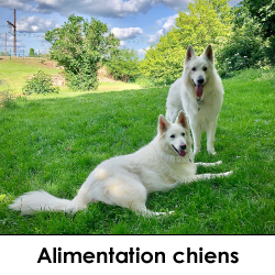 alimentations chiens